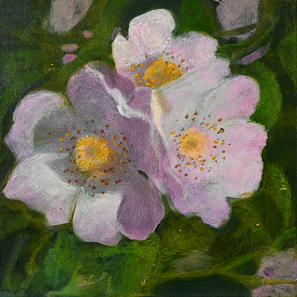Dog rose: painting
